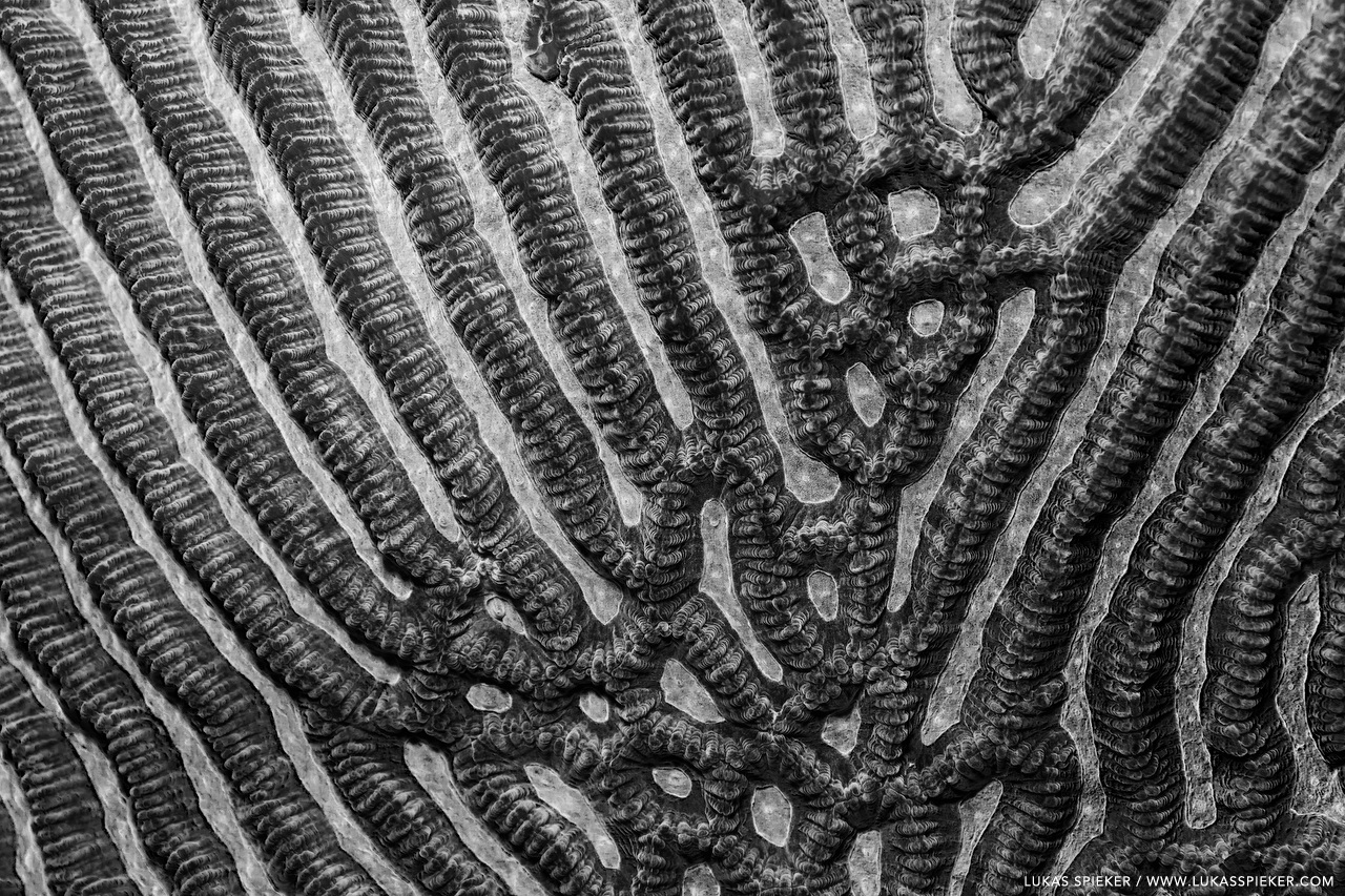 Brain coral, Memba Bay, Strait of Mozambique.